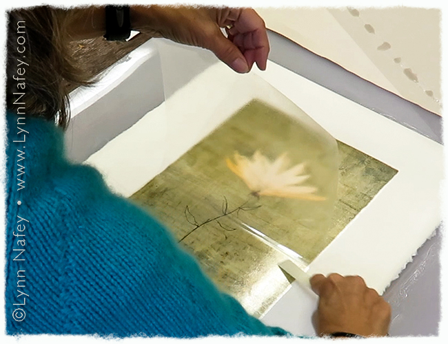 Lifting the film to reveal the transferred pigment print